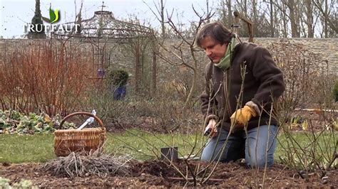Comment Tailler Rosier Buisson by Comment Tailler Un Rosier Buisson Jardinerie Truffaut