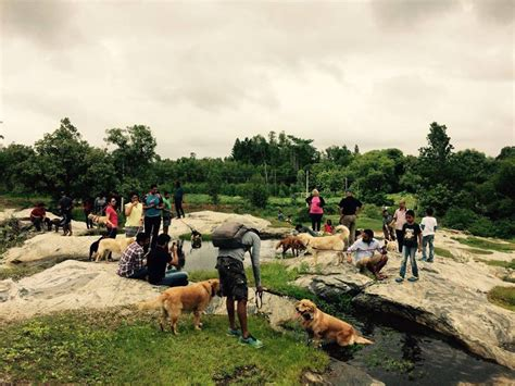 places to play with puppies near me park at the elephant pond collarfolk