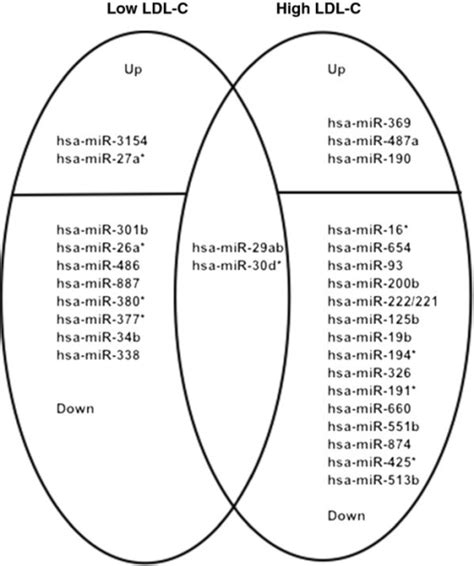 venn diagram dna and rna venn diagram comparing dna and rna choice image how to