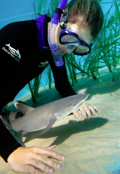 baby shark news a discovery cove shark expert gets a close up view of a