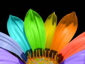 colorful flower bright colors images colorful flower hd wallpaper and