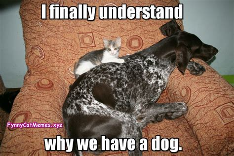 Funny Dog And Cat Memes - funny cat memes www pixshark com images galleries with a bite