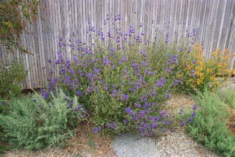 cultivars at rancho santa ana botanic garden letsgoseeit com