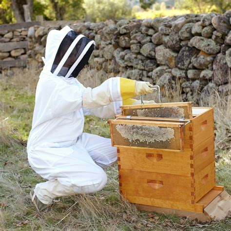 backyard beekeeping kit backyard beehive beekeeping bees