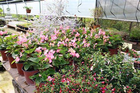 piante bellissime da giardino piante da giardino ornamentali il sorbo vivai di