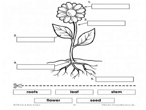coloring page parts of a flower 1o eso natural sciences plants i plant and flower