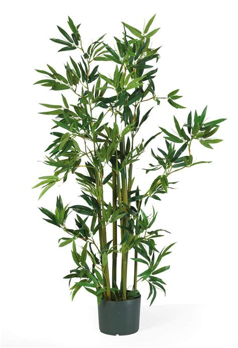Bamboo In Planter Box by 111 Best Shrubs Png Images On Pinterest Flower