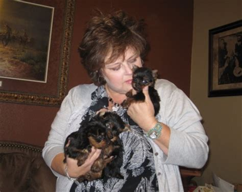 yorkies for sale in baton miniature yorkie puppies for sale in louisiana breeds picture