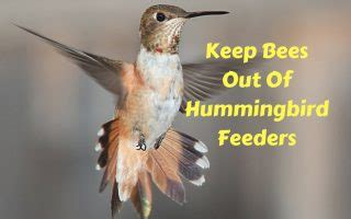 best 28 how to keep bees out of hummingbird feeders