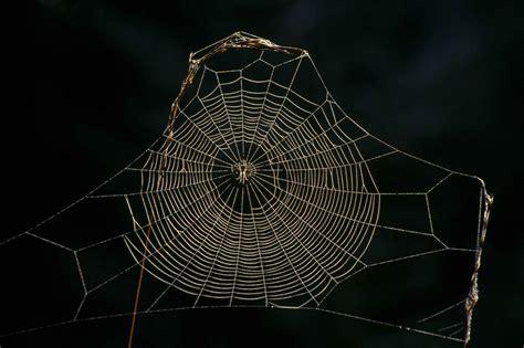 www web spider web porcelain evolution lab