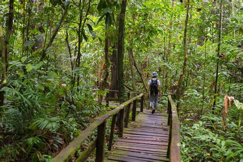 Borneo Kalimantan the borneo island of kalimantan is an creation of