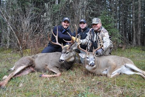 Deer Vs mule deer vs whitetail together but not mixed