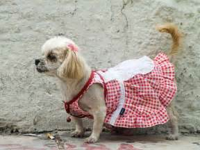 Dog clothes ideas dog outdoor wear coats vests and booties for