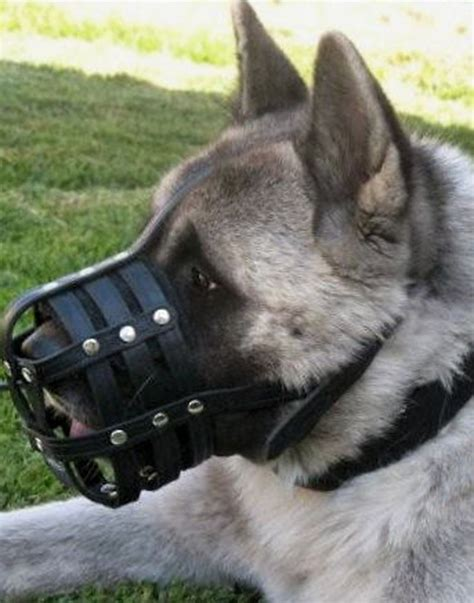 comfortable muzzles for dogs akita training leather dog muzzle husky muzzles uk