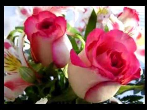 imagenes variadas de rosas imagenes de rosas youtube