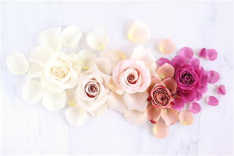 digital blooms february  spring flower  hd