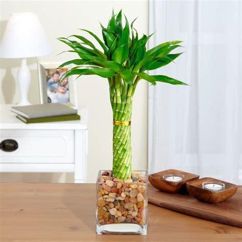 decorar los interiores con plantas decorar con plantas de interior la casa