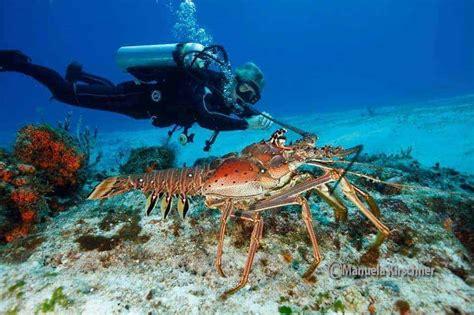 best dive spots best scuba diving spots in cozumel mexico