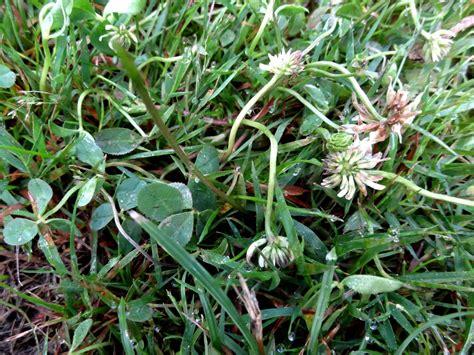 Pflanzen Im Haus 4508 pflanzen im haus die pflanzen im haus lidl deutschland
