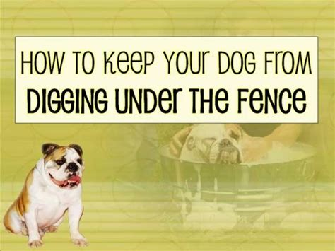 How To Keep Pets by How To Keep Your From Digging The Fence On Vimeo