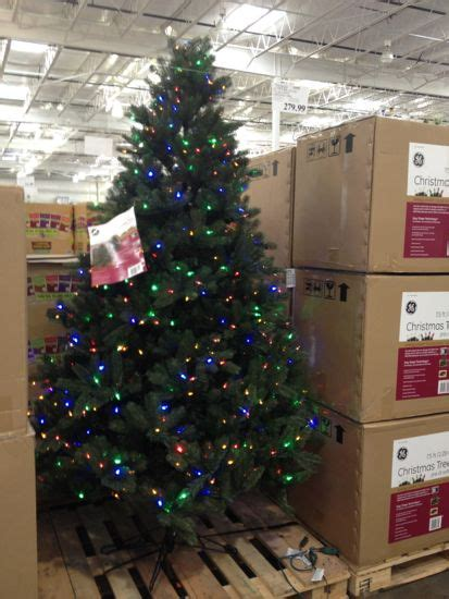 costco xmas trees what can you find at costco october 2013