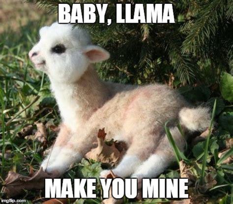 Llama Meme - baby llama make you mine imgflip