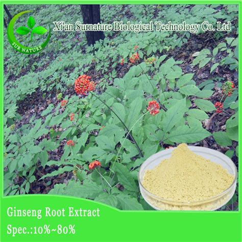 Ginseng Per Kilo 100 puresiberian ginseng root extract ginseng prices