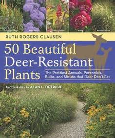 pin by mike wilczynski on deer resistant plants pinterest zone 7 small evergreen trees plants for privacy