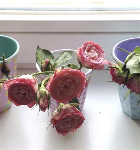 Blumen Die Lange Halten by Valentinstag Wie Bleiben Blumen L 228 Nger Frisch Rosanisiert
