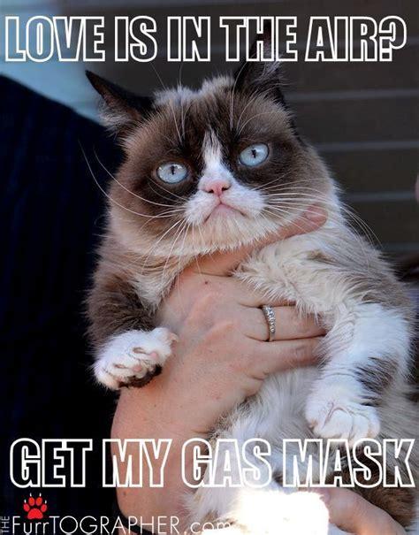 Grumpy Cat Wedding Meme - 825 best grumpy cat images on pinterest grumpy cat