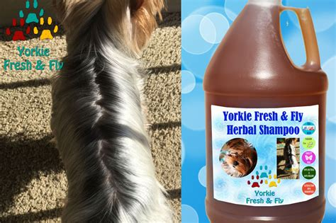 yorkie hair care products moringa silky coat grooming products shoo dogs yorkie shoo
