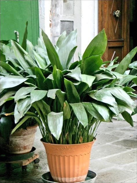 easy houseplants five easy houseplants