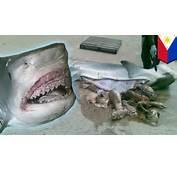 Shark Eats Man Human Remains Pulled From Tiger By Filipino