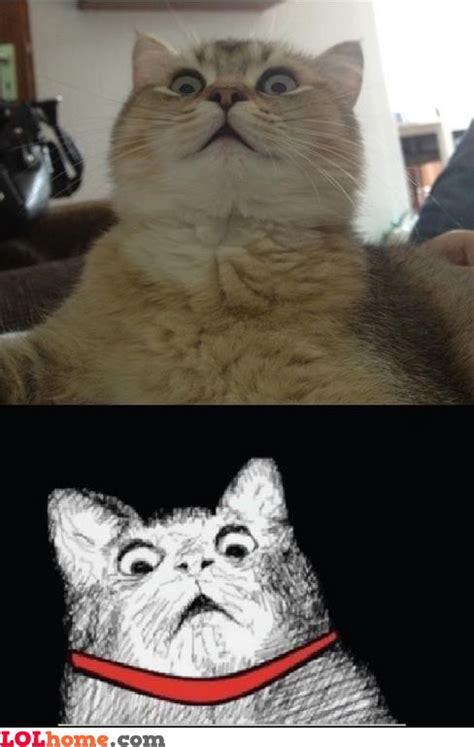 Cat Pic Meme - cat meme funny pic