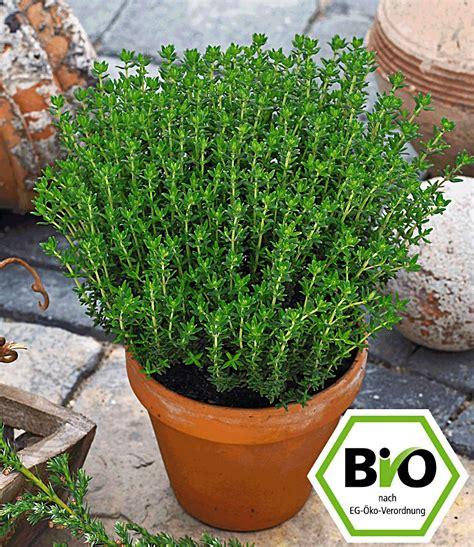 Garten Kaufen Nähe Wien by Bio Gew 252 Rzthymian 1a Pflanzen Kaufen Baldur Garten