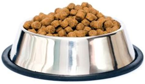 dog wont eat out of bowl 33 best images about casey on pinterest dog paw prints