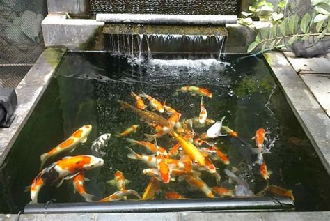 Pompa Kolam Ikan cara membuat filter kolam ikan mudah dan cepat lengkap