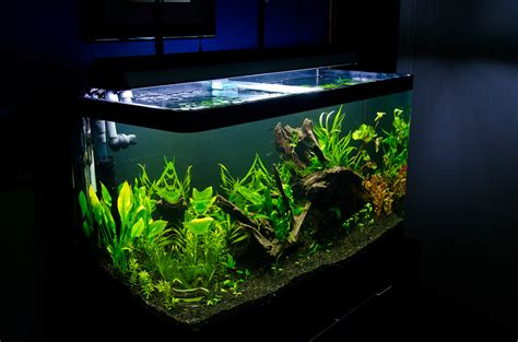 Fluval Aquascape by The Osaka Forest Page 5