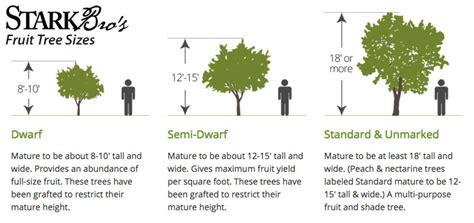 fruit tree spacing chart fruit tree sizes stark bro s
