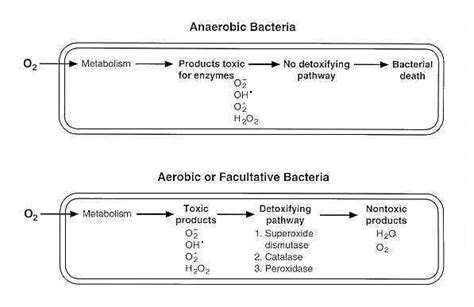 Why Check Ppd For Detox by Oxygen Requirements For Pathogenic Bacteria Microbeonline