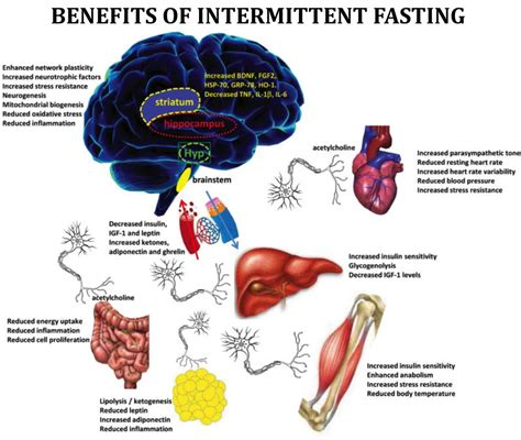 mimicking fasting all the benefits of fasting without the books monkey brain takes an aspirin 61 best bio images on