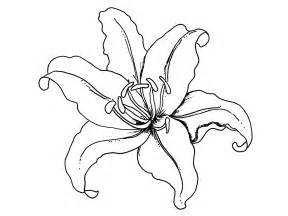 coloring pages of lily flowers image