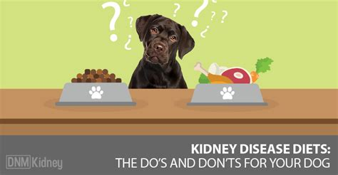 renal diet for dogs kidney failure what to feed your