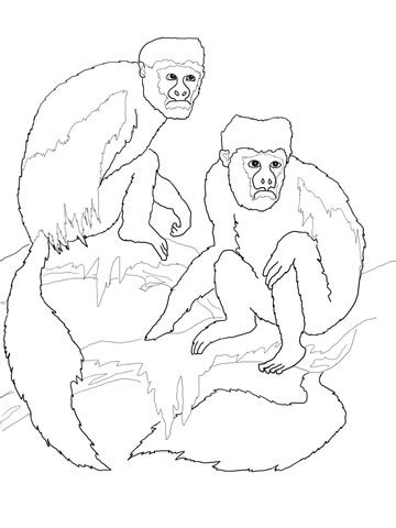 capuchin monkey coloring pages how to draw capuchin monkey