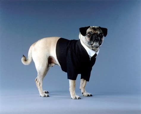 frank pug frank pug images frompo