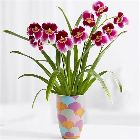 Orchid Plant by 94 Best Images About Orchideen On Modern Vases