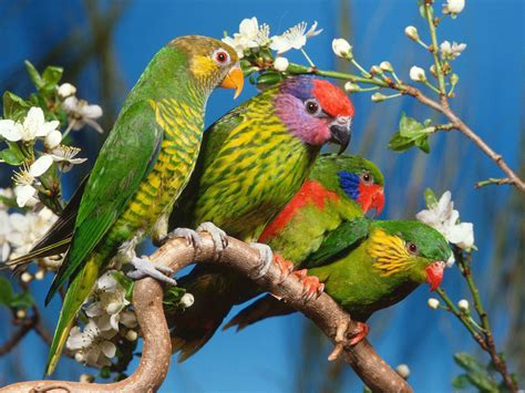 wallpaper with birds wallpapers love birds desktop wallpapers