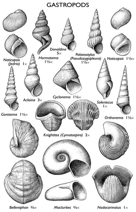 illinois state geological survey gastropods isgs