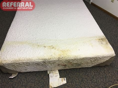 mold mildew and mold stains on fort wayne mattress