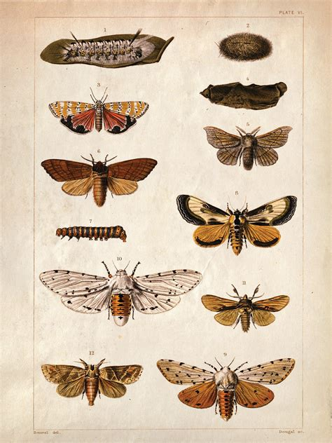 printable insect poster 18x24 vintage science plate poster insects butterflies